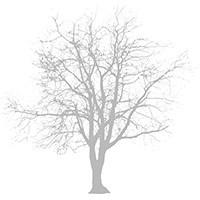 Broste Branch Servietit 33x33 cm Hopea