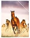 Horses Kuminauhakansio Sense