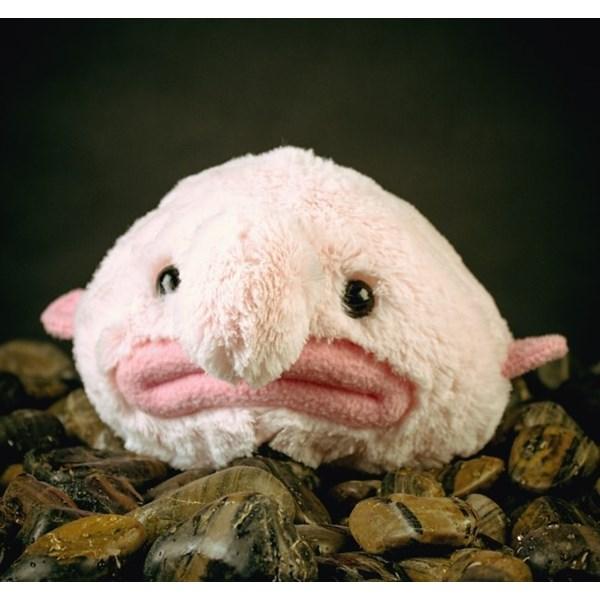 Blobfish Mjukisdjur  Firebox - gosedjur