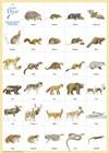 Svenska djur affisch