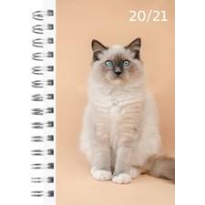 Burde Kalender 20-21 Compact Pets