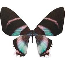 Sommerfugler, H: 6,1 cm, B: 7 cm, 20stk., 300 g