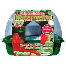 Grow Your Own Sugar Baby Watermelon