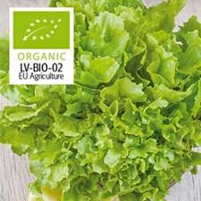 Sallat, Escarole-, Nuance, Organic