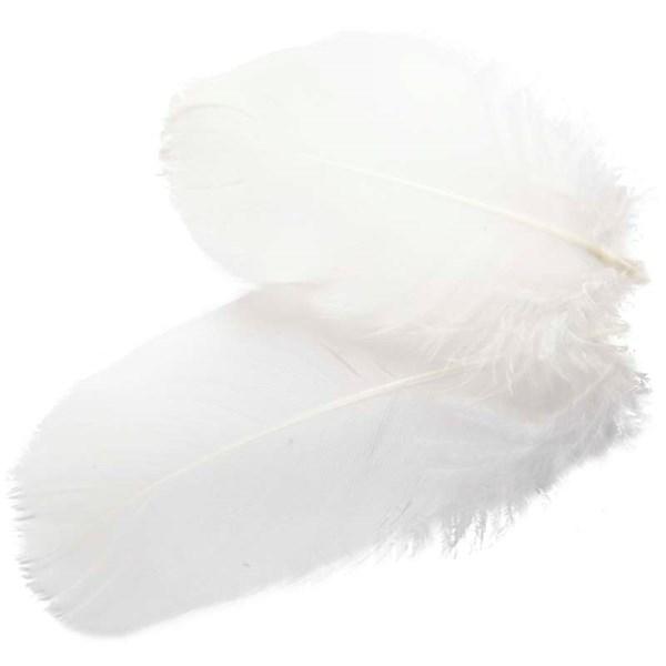 Rundfjær, gås, ca. 8 cm, hvit, 3g
