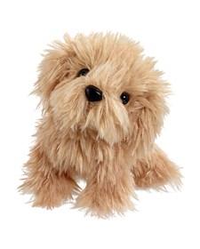 Scruffy Bamse, Brun Hund, Scruffies