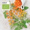 Tomat, Hög, Golden Currant, Organic